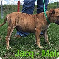 Adopt A Pet :: Jacq - Waycross, GA