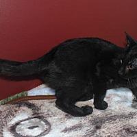 Adopt A Pet :: Janet (& Chrissy, Jack) - Herndon, VA