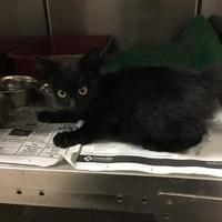 Adopt A Pet :: Gizmo - Louisburg, NC