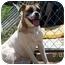 Photo 3 - Boxer/English Bulldog Mix Dog for adoption in Goodland, Kansas - Porkchop