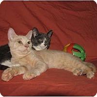 Adopt A Pet :: URGENT - KITTEN OVERFLOW - Norwich, NY