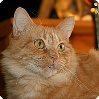 Adopt A Pet :: Sunny (dog friendly) - Arlington, VA