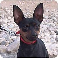 Adopt A Pet :: Kobe - Las Vegas, NV