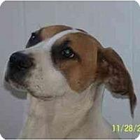 Adopt A Pet :: Toby - Wakefield, RI