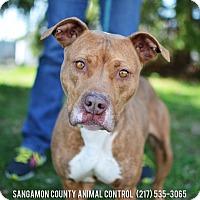 Adopt A Pet :: Queen - Springfield, IL