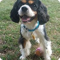 Adopt A Pet :: Fleur - La Mirada, CA