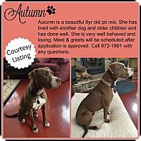 Adopt A Pet :: Autumn - Dunkirk, NY