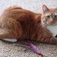 Adopt A Pet :: Tigger - Springfield, OR