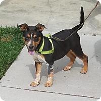 Adopt A Pet :: Hunter - Doylestown, PA