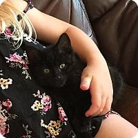 Adopt A Pet :: Black Bean - Duluth, GA