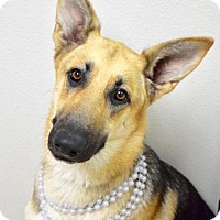 Adopt A Pet :: Katie - Dublin, CA