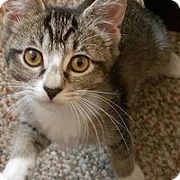 Adopt A Pet :: Precious - Toms River, NJ