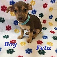 Adopt A Pet :: Feta - sylmar, CA