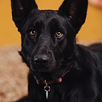 Adopt A Pet :: Raven - Portland, OR