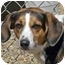 Photo 1 - Beagle/Shepherd (Unknown Type) Mix Dog for adoption in Berea, Ohio - Flower