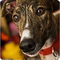 Adopt A Pet :: Dash - Philadelphia, PA
