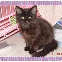 Adopt A Pet :: Butterrfly - KANSAS, MO