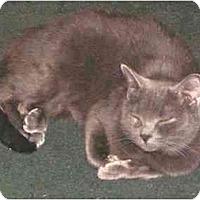 Adopt A Pet :: Yoda - Milford, OH
