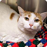 Adopt A Pet :: Sadie - Toledo, OH