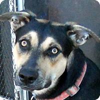 Adopt A Pet :: Maude - Oakley, CA