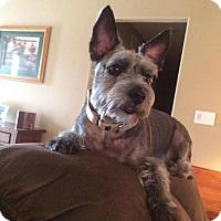 Adopt A Pet :: Griffin - Springfield, MO