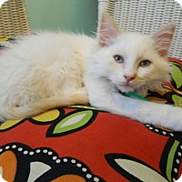 Adopt A Pet :: Altair - The Colony, TX