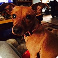 Adopt A Pet :: Hopper - Beavercreek, OH
