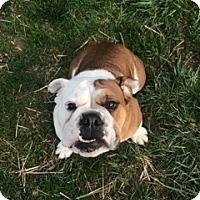 Adopt A Pet :: Lulu - Columbus, OH