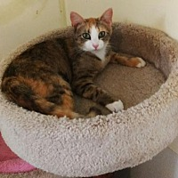 Adopt A Pet :: Sybil - Greenback, TN