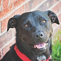 Adopt A Pet :: Tessa - Kingwood, TX