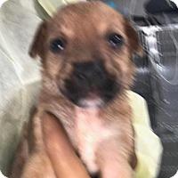 Adopt A Pet :: H. Hartlee - Freeport, FL