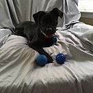 Adopt A Pet :: Sidney