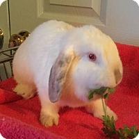 Adopt A Pet :: Jilly - Waynesboro, VA