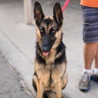 Adopt A Pet :: Magnolia - Fresno CA, CA