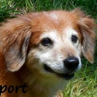 Adopt A Pet :: SPORT - Palm Coast, FL