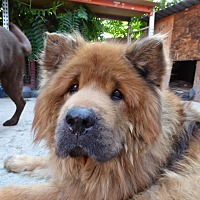 Adopt A Pet :: Tony - Greeley, CO