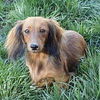 Adopt A Pet :: Fancy - Anaheim, CA