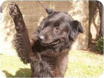 Retriever (Unknown Type) Mix Dog for adoption in El Cajon, California - Poochie