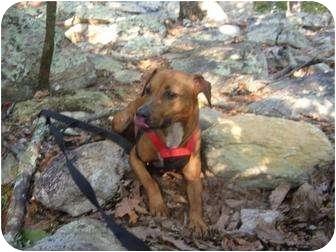 Dachshund/Beagle Mix Dog for adoption in Woodstock, Georgia - Marko