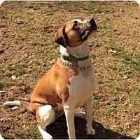 Adopt A Pet :: Callie - Accord, NY