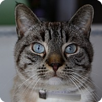 Adopt A Pet :: Coolio - Brooklyn, NY