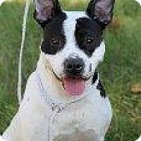 Adopt A Pet :: Birdie Marie - Alexandria, VA