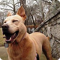Adopt A Pet :: Luna - ADOPTED - Tipp City, OH