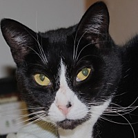 Adopt A Pet :: Dee Dee - Middletown, CT