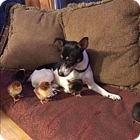 Adopt A Pet :: Olaf - Washington, PA