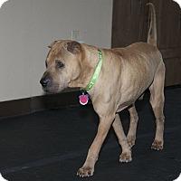 Adopt A Pet :: Pompei - Houston, TX