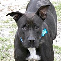 Adopt A Pet :: Chloe - Loxahatchee, FL