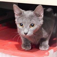 Adopt A Pet :: WALTER CRONCAT TH - Tampa, FL