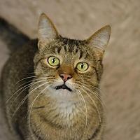 Adopt A Pet :: Jessie - Byron Center, MI