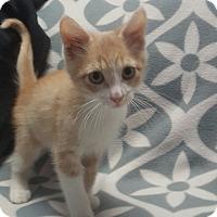 Adopt A Pet :: Eggminton - Hawk Point, MO